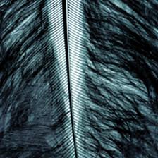 Marabufeder schwarz