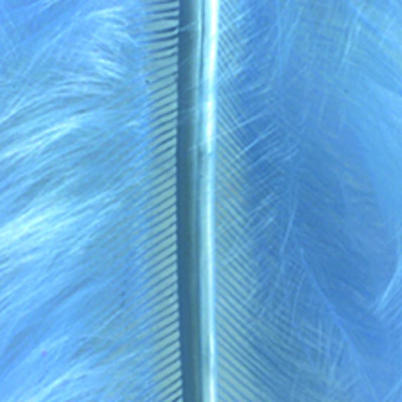 Marabufeder hellblau
