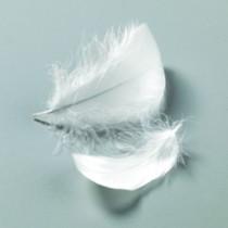 Deko-Federn weiß
