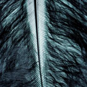 Marabufedern schwarz 8 - 10cm 2g